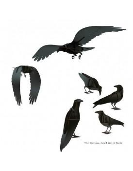 Ibride Raven Edgar