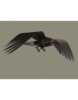 Ibride Raven Adam