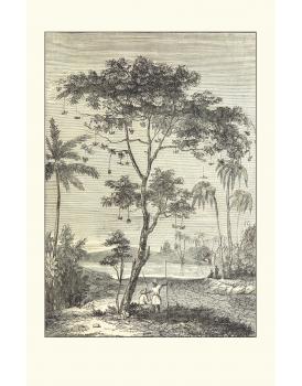 Postkaart bomen 1