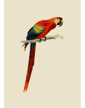 Postkaart dieren 53