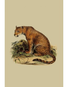 Postkaart dieren 44