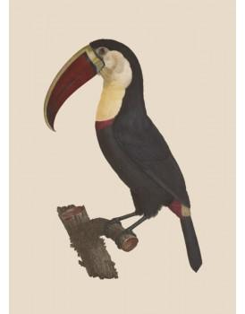 Postkaart dieren 48