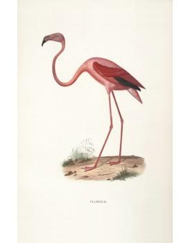 Postkaart dieren 50
