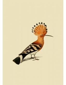 Postkaart dieren 55