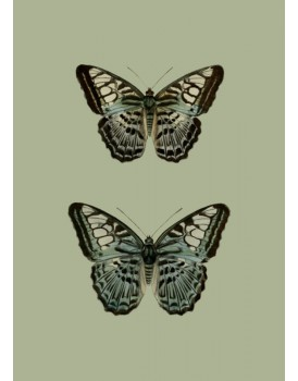 Postkaart dieren 64