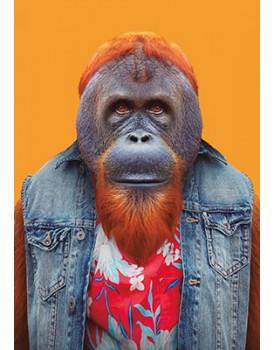 Zoo portraits 56