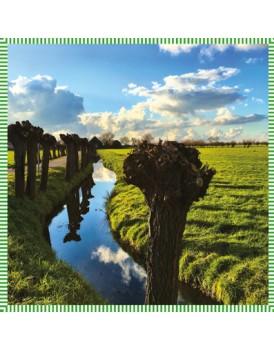 Het grote avontuur Holland knotwilgen