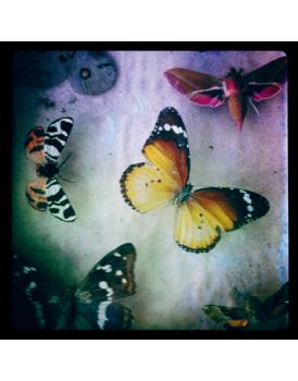 Het grote avontuur vlinders 1