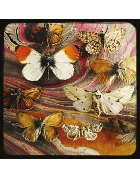 Het grote avontuur vlinders 2