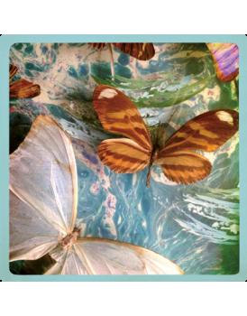 Het grote avontuur vlinders 3