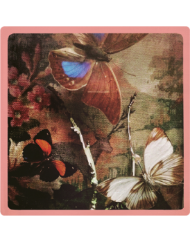 Het grote avontuur vlinders 4