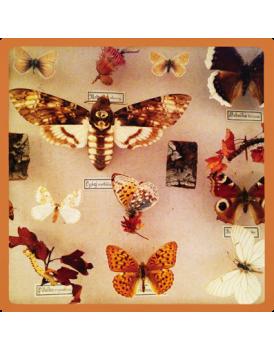 Het grote avontuur vlinders 5