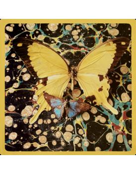 Het grote avontuur vlinders 6