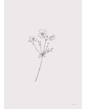 postkaart Inkylines anemoon