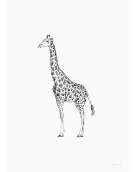 postkaart Inkylines giraf
