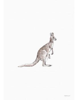 postkaart Inkylines kangoeroe