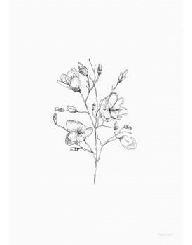 postkaart Inkylines magnolia