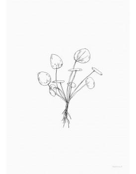 postkaart Inkylines pannenkoekplant