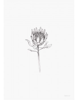 postkaart Inkylines protea