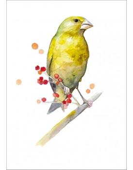Postkaart groenling