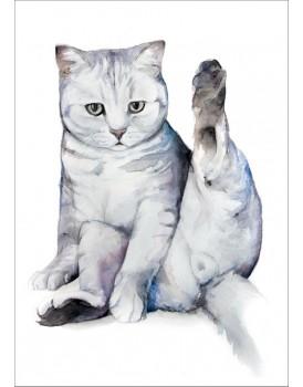 Postkaart katten 2
