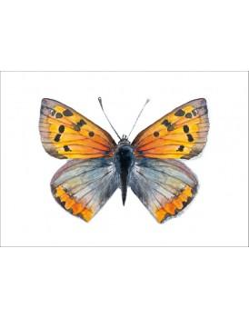 Postkaart koper vlinder