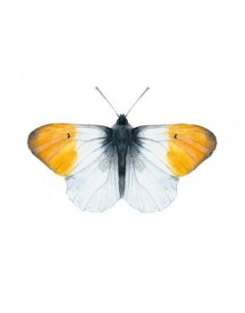 Postkaart oranje vlinder