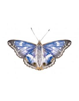 Postkaart purper vlinder