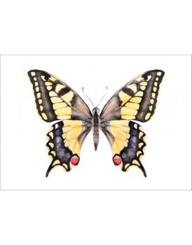 Postkaart zwaluwstaart vlinder