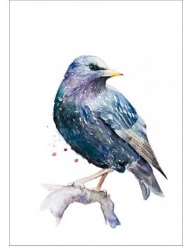 Postkaart spreeuw