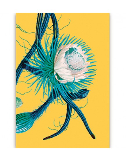 Postkaart flora 11