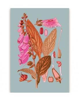 Postkaart flora 16