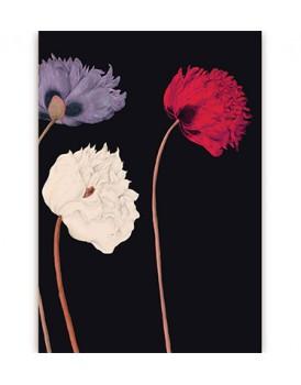 Postkaart flora 7