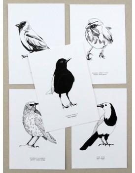 Maartje van de Noort set 5 vogelkaarten