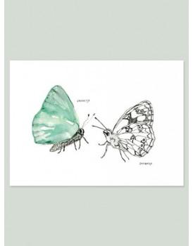 Maartje van den Noort vlinders
